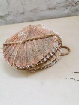 schelpen